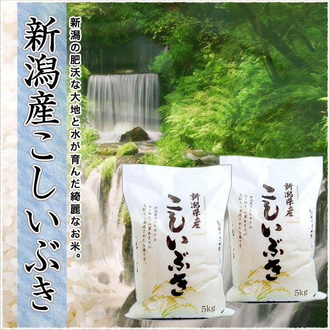 新潟県産こしいぶき 10kg